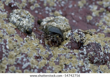 A hermit crab on a rock.