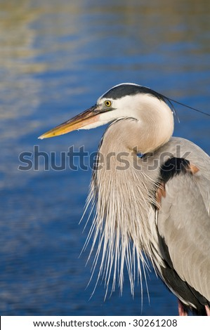 A heron by the water on the Alabama gulf coast.