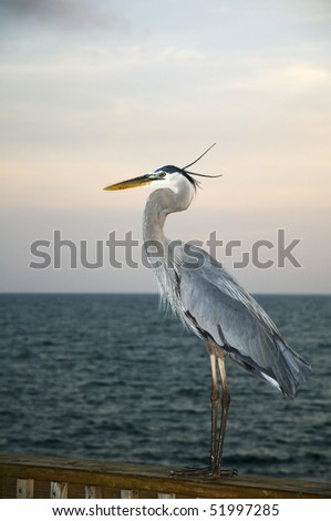 A heron resting on a pier in Gulf Shores Alabama.