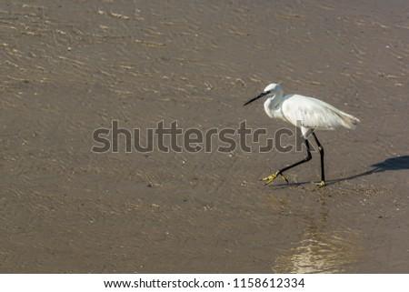 A heron with a long neck, beak and long legs goes along the seashore #1158612334