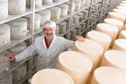 A high angle medium shot of a smiling senior cheese maker standing between shelves of cheddar cheese wheels in the cellar.