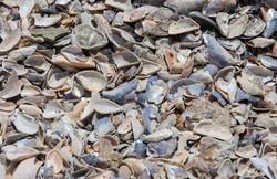 A high angle shot of broken shells on the beach