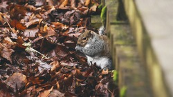 A high angle view of a squirrel during his mealtime, alongside a bridge eating his food