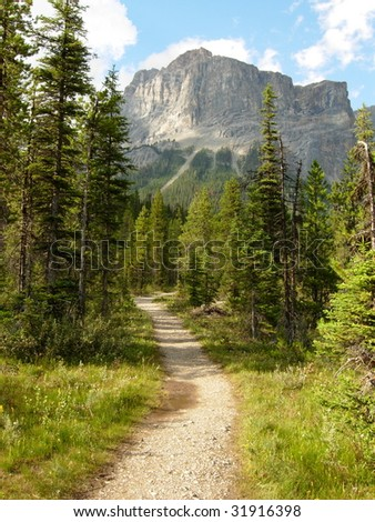 A Hiking Trail in the Canadian Rockies