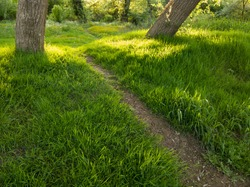 A hiking trail through beautiful nature, across a field overgrown with soft green grass and wildflowers winds around rare trees towards the woods during a sunny evening with bright sunlight.