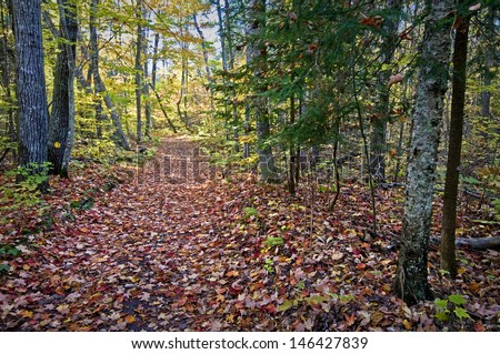 A hiking trail through the autumn woods at Newport State Park in Door County, Wisconsin.