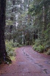 A hiking trail winding through a forest on a wet and muddy autumn day.