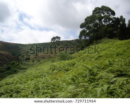 a hillside covered in bracken #729711964