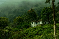 A home stay in a tea estate in the district Wayanad (Kerala). This estate falls in the way to Chembra Peak which is the highest point in the town and is also a famous trekking point in western ghats.