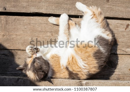 A homeless cat lezhin on an old wooden staircase in the summer, washed, licking paws. Close-up. View from above