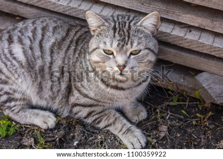 A homeless cat outdoors in the summer. Close-up