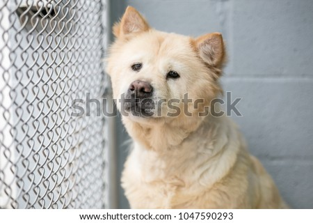A homeless dog in an animal shelter
