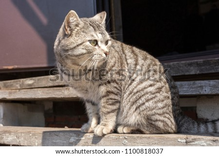 A homeless gray cat on the street, sitting on the boards. Close-up