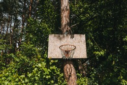 A homemade basket with a ring and plywood is attached to a tree, a pine for playing basketball outdoors in the forest.