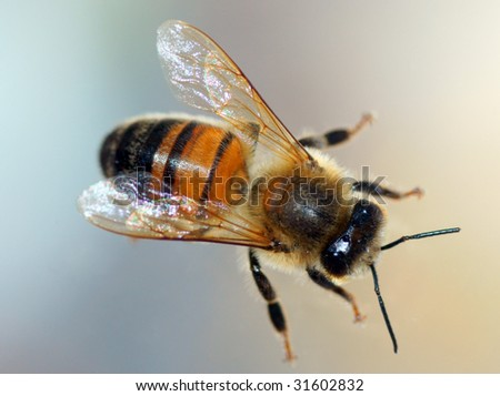a honey bee on the glass