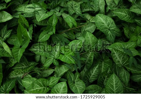 a hordes of green plants stock photo