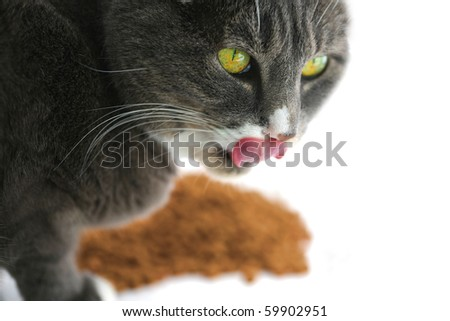 A horizontal color photograph of a yellow eyed cat licking its mouth while standing protectively over a pile of food.