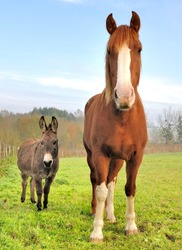 a horse and a donkey seen from the front in a meadow