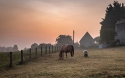 A horse and a sheep grazing peacefully together, as the sun rises over the Normandy countryside, in Northern France