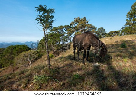 Stock Photo A horse eating grass on the hill. Royalty high quality free stock image of the alone horse on a mountain in the morning