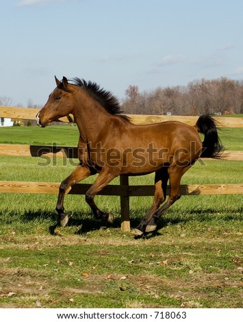 A horse galloping around the pasture. Slight motion blur on the front hooves because, well, they were in fast motion.