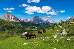 A horse grazes high in the mountains, Georgia panorama