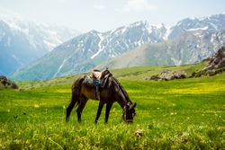 A horse grazes in the mountains. Spring mountain landscape. Meadow with green grass and flowers. Snow on the mountain peaks. Mountain tourism. The beauty of the Tien Shan mountains. Alpine meadows.
