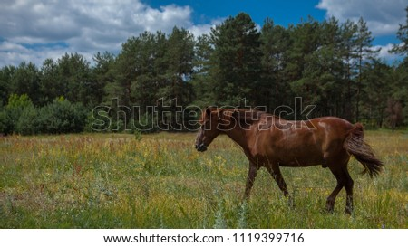 A horse in a forest glade. A bright summer photo. The nature of the village. #1119399716