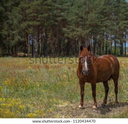 A horse in a forest glade. A bright summer photo. The nature of the village. #1120434470