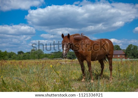 A horse in a forest glade. A bright summer photo. The nature of the village. #1121336921