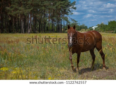 A horse in a forest glade. A bright summer photo. The nature of the village. #1122762557