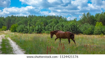 A horse in a forest glade. A bright summer photo. The nature of the village. #1124421176