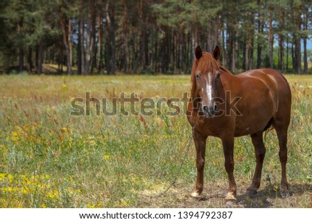 A horse in a forest glade. A bright summer photo. The nature of the village. #1394792387