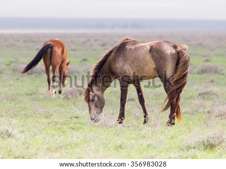 cores do rio a horse in a pasture in nature