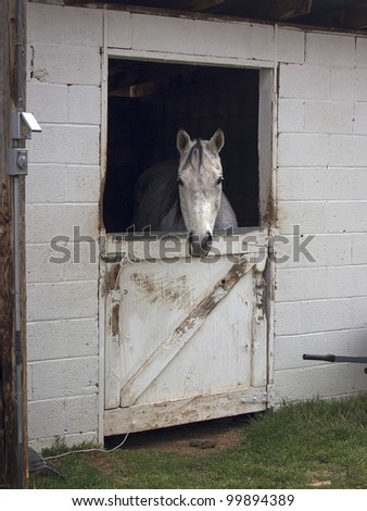 A horse peers from its stall in a rural ranching community.
