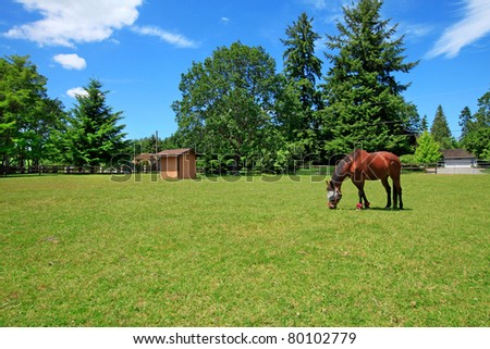 A horse ranch in Washington State, USA with horse eating at the pasture and the house in the background.