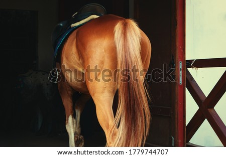 A horse's ass.The horse stands with its back to the camera.Selective focus on the tail Foto stock ©