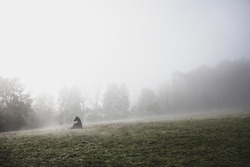 A horse sits in the middle of the fog. A quiet, rural landscape.