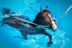 A horse swims at equine swimming pool .