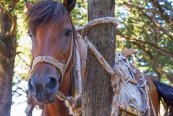 A horse tethered to a tree