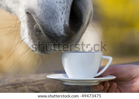 A Horse that seem to be drinking or smelling a cup of coffee or tea.