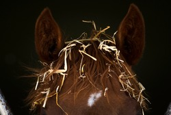 A horse with straw on his head.