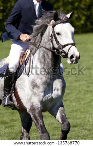 A horsewoman ready for a equestrian competition