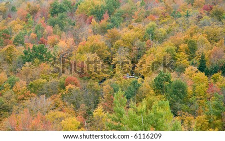 A house is barely visible over the brightly colored trees on a mountainside