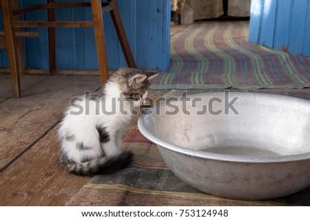 a huge bowl of milk #753124948