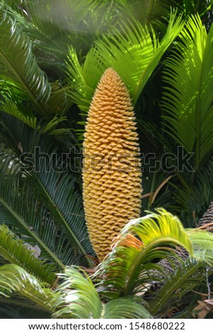 A huge exotic fruit of an exotic plant