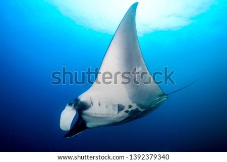 A huge Oceanic Manta Ray (Manta Birostris) at Black Rock in the Mergui Archipelago, Myanmar #1392379340
