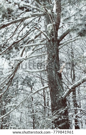 A huge pine tree covered in snow and ice. #779841961
