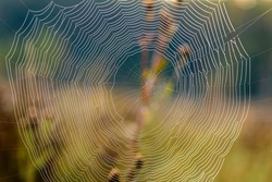 A huge spider web with concentric circles on the background of an autumn field