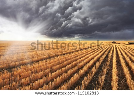 A huge storm cloud is almost completely covered the sky.  Shining sun peeks out from under the clouds.   The harvest in the fields of Montana